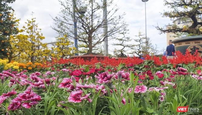 Ảnh: Rộn ràng chợ hoa xuân Đà Nẵng ảnh 1