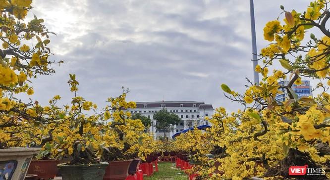 Ảnh: Rộn ràng chợ hoa xuân Đà Nẵng ảnh 23