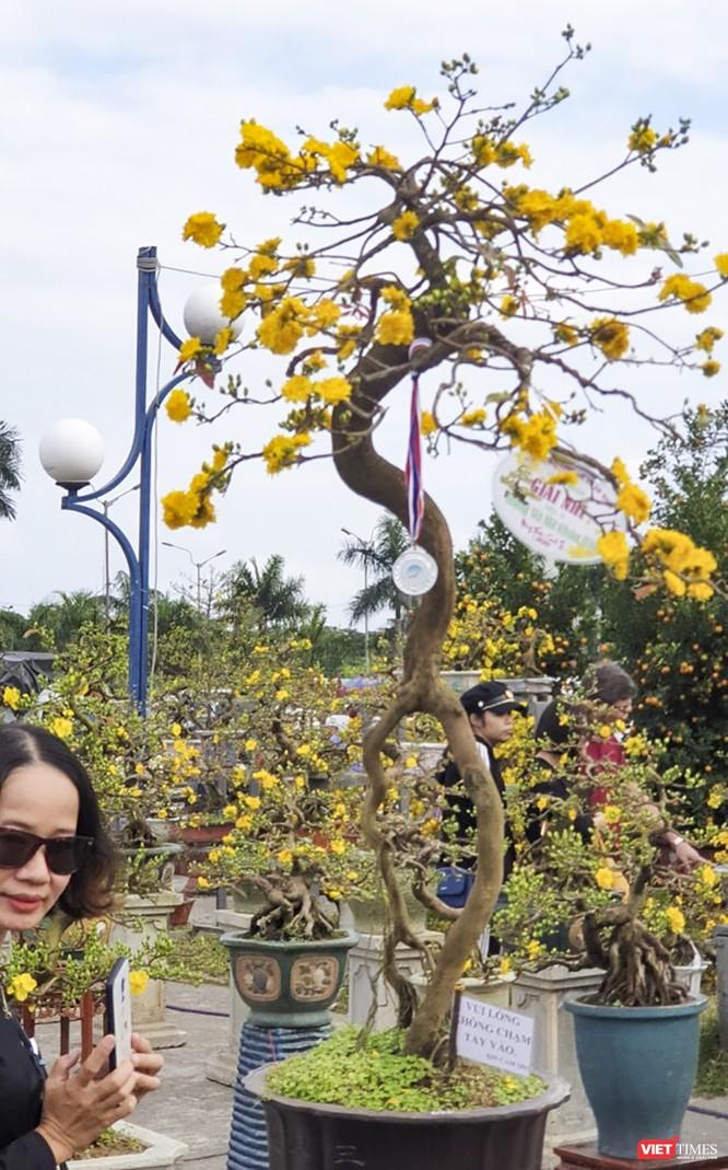 Ảnh: Rộn ràng chợ hoa xuân Đà Nẵng ảnh 24