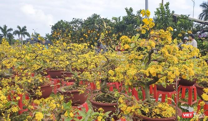 Ảnh: Rộn ràng chợ hoa xuân Đà Nẵng ảnh 6