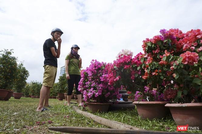 Ảnh: Rộn ràng chợ hoa xuân Đà Nẵng ảnh 7