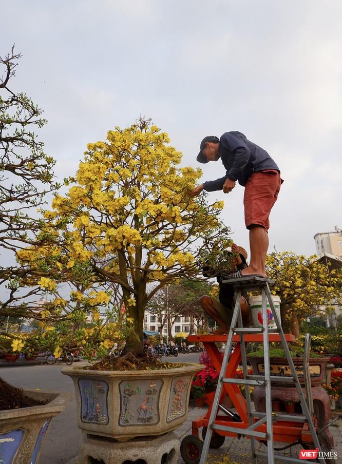 Ảnh: Rộn ràng chợ hoa xuân Đà Nẵng ảnh 8