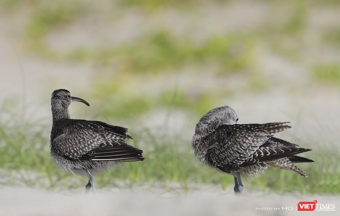 """Chùm ảnh: Những """"siêu mẫu"""" được săn đón ở Sơn Trà vào mùa chim di cư ảnh 6"""