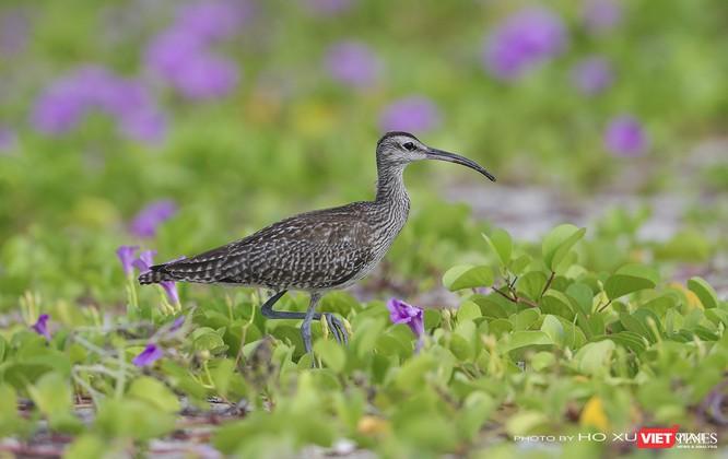 """Chùm ảnh: Những """"siêu mẫu"""" được săn đón ở Sơn Trà vào mùa chim di cư ảnh 27"""