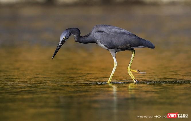 """Chùm ảnh: Những """"siêu mẫu"""" được săn đón ở Sơn Trà vào mùa chim di cư ảnh 5"""