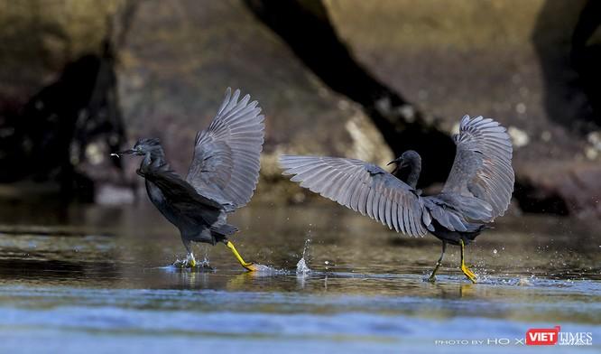 """Chùm ảnh: Những """"siêu mẫu"""" được săn đón ở Sơn Trà vào mùa chim di cư ảnh 26"""