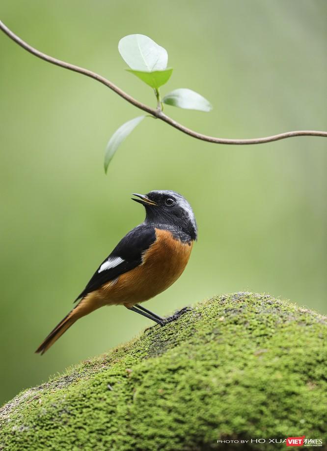 """Chùm ảnh: Những """"siêu mẫu"""" được săn đón ở Sơn Trà vào mùa chim di cư ảnh 24"""