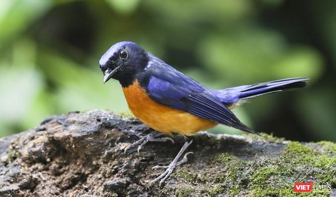 """Chùm ảnh: Những """"siêu mẫu"""" được săn đón ở Sơn Trà vào mùa chim di cư ảnh 30"""
