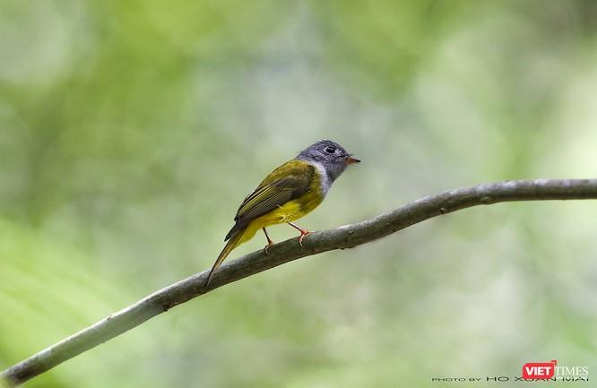 """Chùm ảnh: Những """"siêu mẫu"""" được săn đón ở Sơn Trà vào mùa chim di cư ảnh 22"""