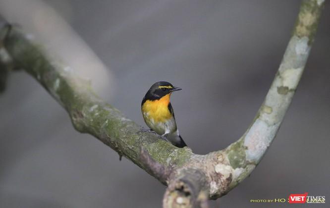 """Chùm ảnh: Những """"siêu mẫu"""" được săn đón ở Sơn Trà vào mùa chim di cư ảnh 31"""