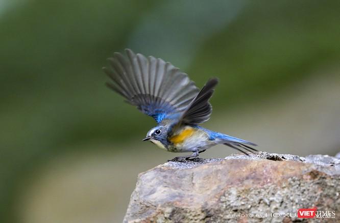 """Chùm ảnh: Những """"siêu mẫu"""" được săn đón ở Sơn Trà vào mùa chim di cư ảnh 21"""