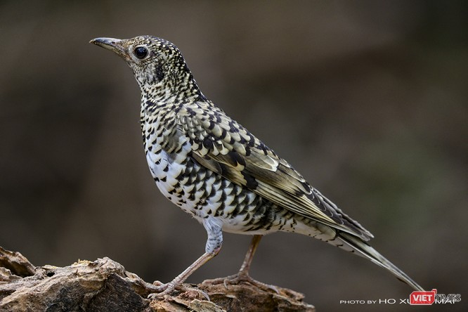"""Chùm ảnh: Những """"siêu mẫu"""" được săn đón ở Sơn Trà vào mùa chim di cư ảnh 18"""