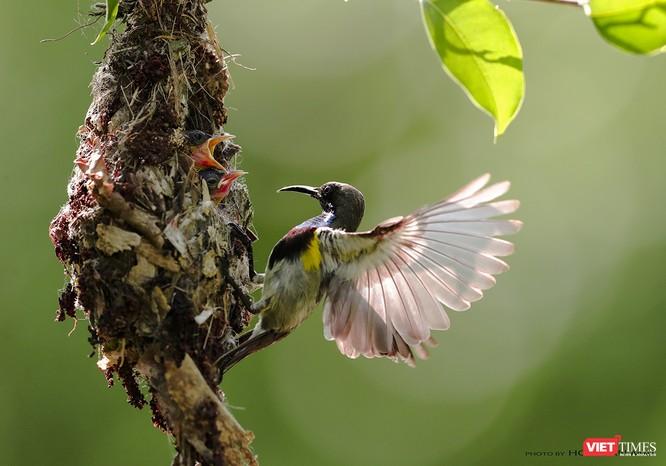 """Chùm ảnh: Những """"siêu mẫu"""" được săn đón ở Sơn Trà vào mùa chim di cư ảnh 34"""