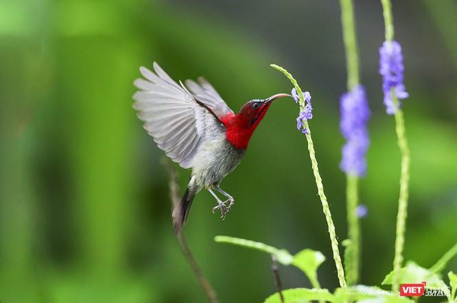 """Chùm ảnh: Những """"siêu mẫu"""" được săn đón ở Sơn Trà vào mùa chim di cư ảnh 17"""
