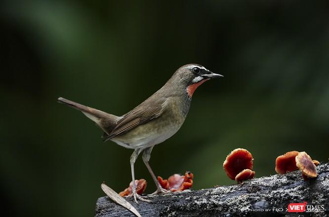 """Chùm ảnh: Những """"siêu mẫu"""" được săn đón ở Sơn Trà vào mùa chim di cư ảnh 15"""
