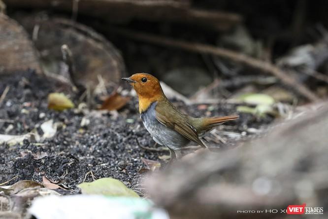 """Chùm ảnh: Những """"siêu mẫu"""" được săn đón ở Sơn Trà vào mùa chim di cư ảnh 16"""