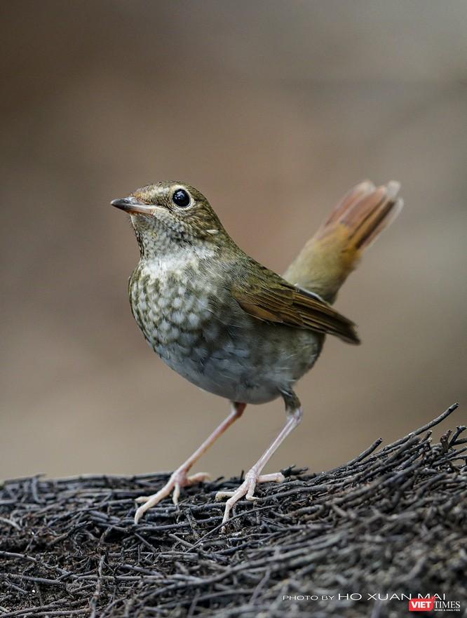"""Chùm ảnh: Những """"siêu mẫu"""" được săn đón ở Sơn Trà vào mùa chim di cư ảnh 14"""