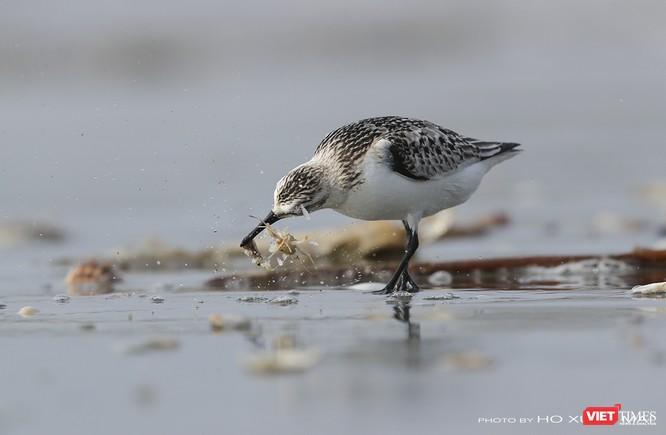 """Chùm ảnh: Những """"siêu mẫu"""" được săn đón ở Sơn Trà vào mùa chim di cư ảnh 36"""