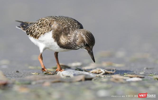 """Chùm ảnh: Những """"siêu mẫu"""" được săn đón ở Sơn Trà vào mùa chim di cư ảnh 11"""