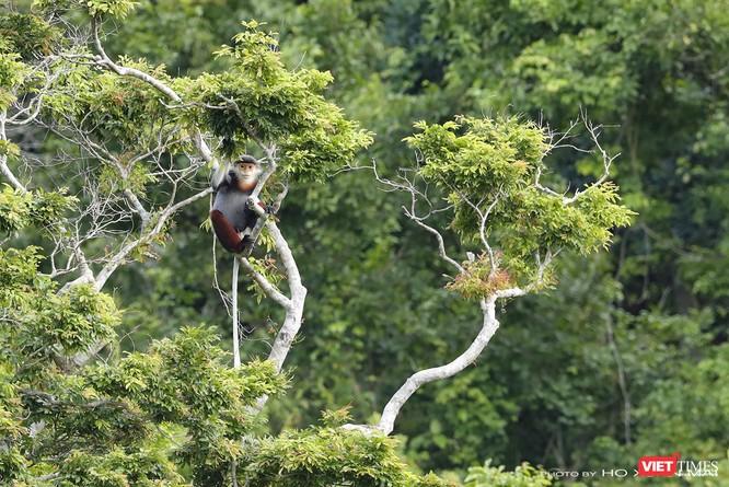 """Chùm ảnh: Những """"siêu mẫu"""" được săn đón ở Sơn Trà vào mùa chim di cư ảnh 1"""