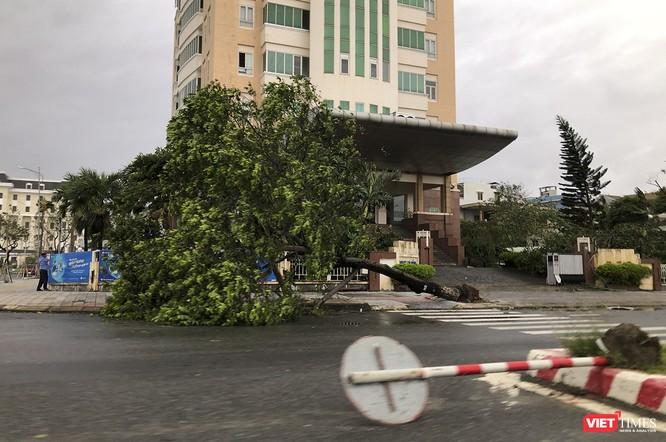 """Đà Nẵng như bãi chiến trường sau trận """"càn quét"""" của siêu bão số 9 ảnh 15"""