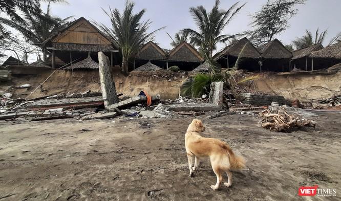 Hậu bão số 13, bãi biển du lịch An Bàng (Hội An) tan hoang ảnh 12