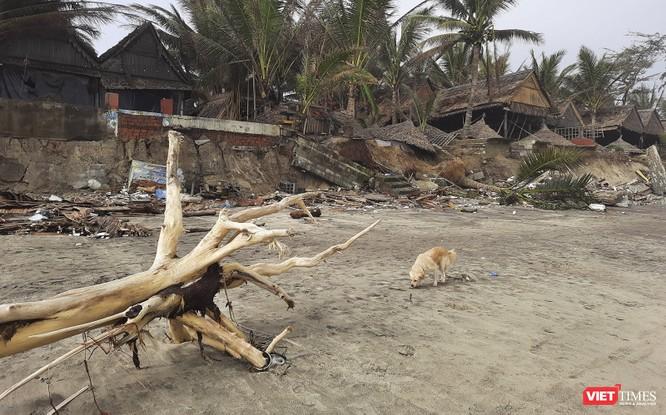 Hậu bão số 13, bãi biển du lịch An Bàng (Hội An) tan hoang ảnh 6