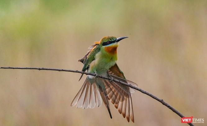 Ảnh: Độc đáo mùa chim trảu ghép đôi giữa lòng Đà Nẵng ảnh 5