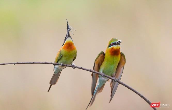 Ảnh: Độc đáo mùa chim trảu ghép đôi giữa lòng Đà Nẵng ảnh 20