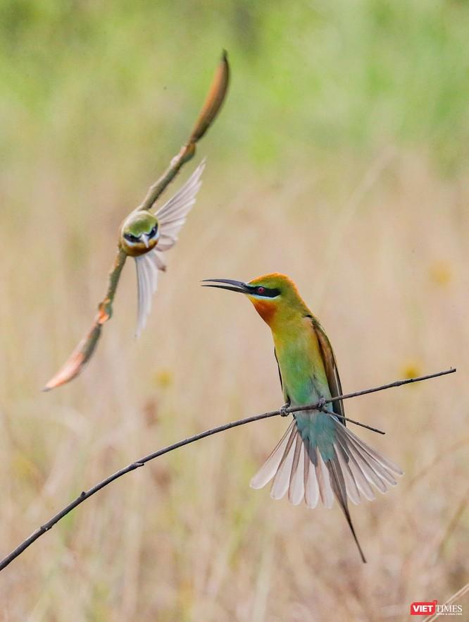 Ảnh: Độc đáo mùa chim trảu ghép đôi giữa lòng Đà Nẵng ảnh 23