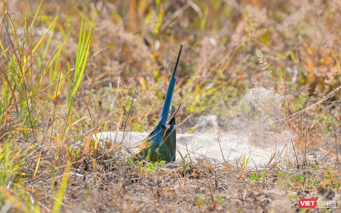 Ảnh: Độc đáo mùa chim trảu ghép đôi giữa lòng Đà Nẵng ảnh 30