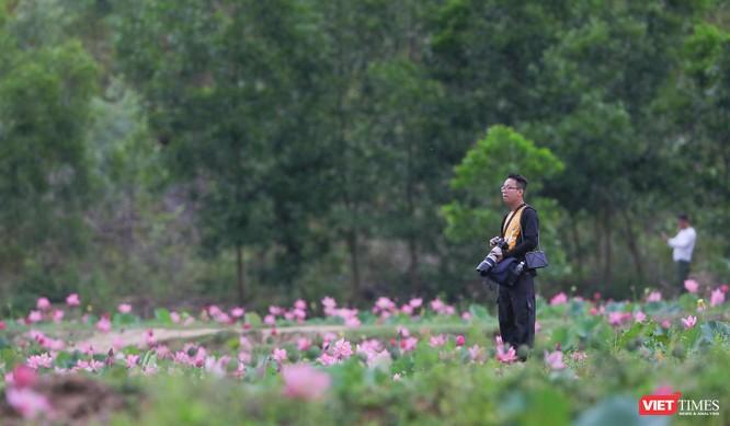 Ảnh: Vẻ đẹp khó cưỡng của đầm sen lớn Trà Lý ở Quảng Nam ảnh 13