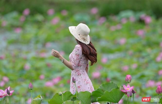 Ảnh: Vẻ đẹp khó cưỡng của đầm sen lớn Trà Lý ở Quảng Nam ảnh 20