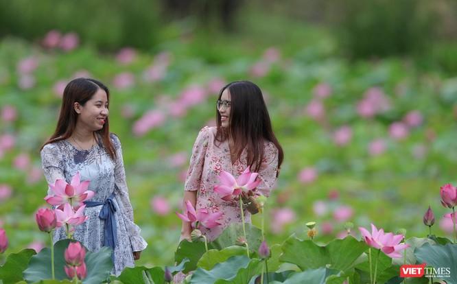 Ảnh: Vẻ đẹp khó cưỡng của đầm sen lớn Trà Lý ở Quảng Nam ảnh 21