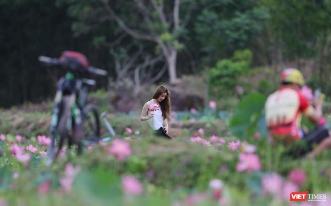 Ảnh: Vẻ đẹp khó cưỡng của đầm sen lớn Trà Lý ở Quảng Nam ảnh 10