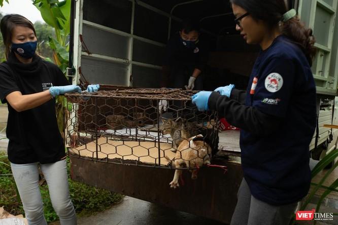Tổ chức FOUR PAWS đóng cửa nhà hàng thịt mèo, giải cứu động vật ảnh 1
