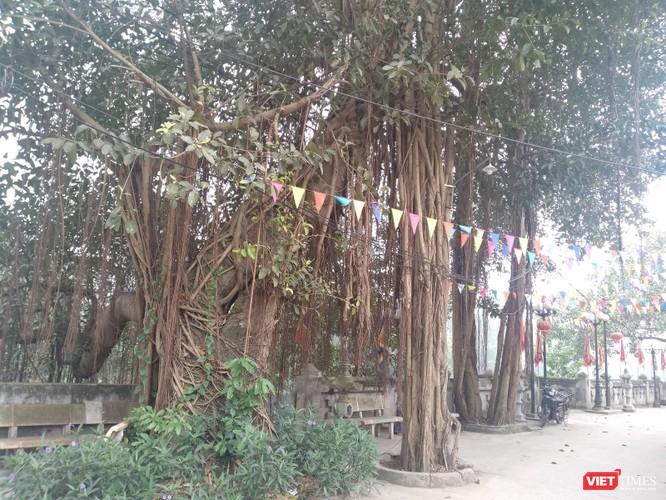 Ngôi làng nhà giàu ngàn năm tuổi bên dòng Nhuệ Giang ảnh 4