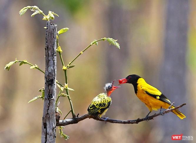 Săn ảnh chim với Ma Rừng và Phù Thủy ảnh 11