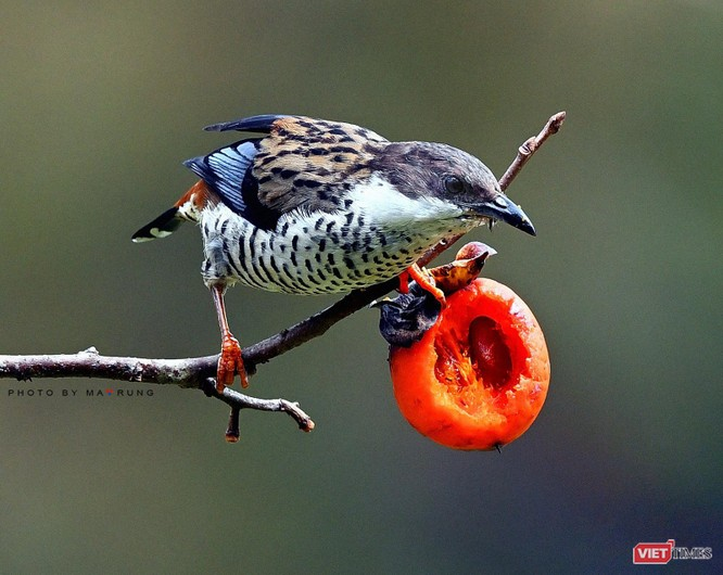 Săn ảnh chim với Ma Rừng và Phù Thủy ảnh 19