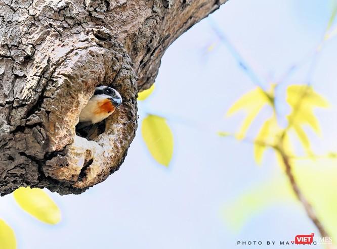 Săn ảnh chim với Ma Rừng và Phù Thủy ảnh 16
