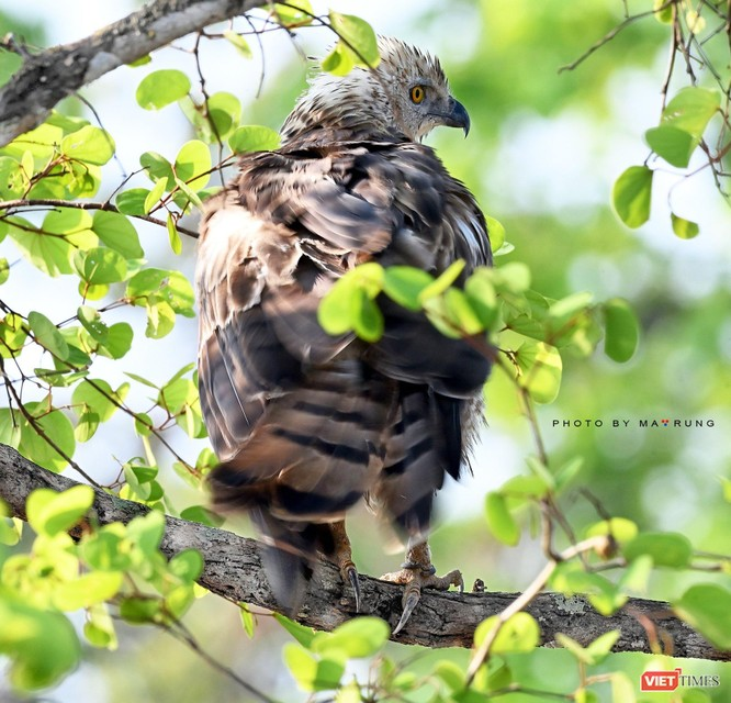 Săn ảnh chim với Ma Rừng và Phù Thủy ảnh 13