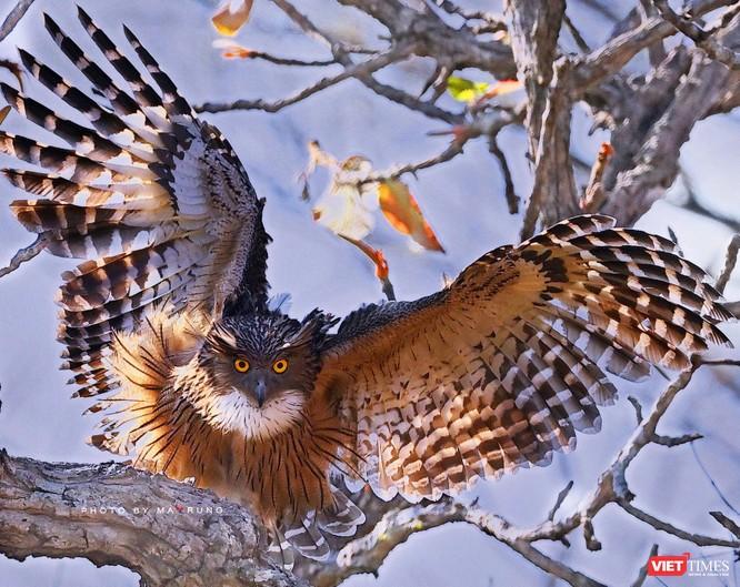 Săn ảnh chim với Ma Rừng và Phù Thủy ảnh 14