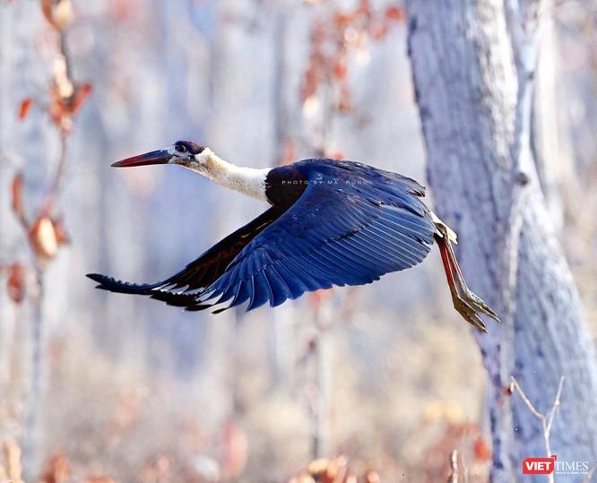 Săn ảnh chim với Ma Rừng và Phù Thủy ảnh 21