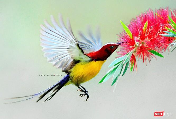 Săn ảnh chim với Ma Rừng và Phù Thủy ảnh 5