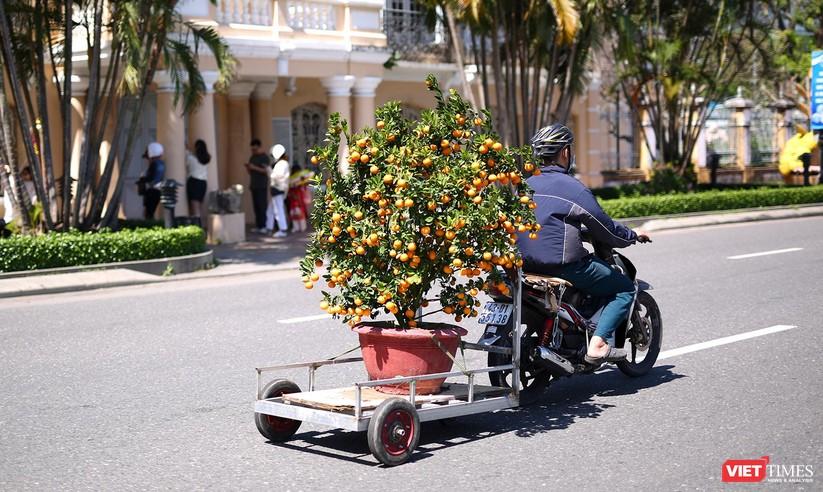 Ảnh: Đà Nẵng nắng đẹp, người dân đổ ra đường hoa đón xuân mới ảnh 24