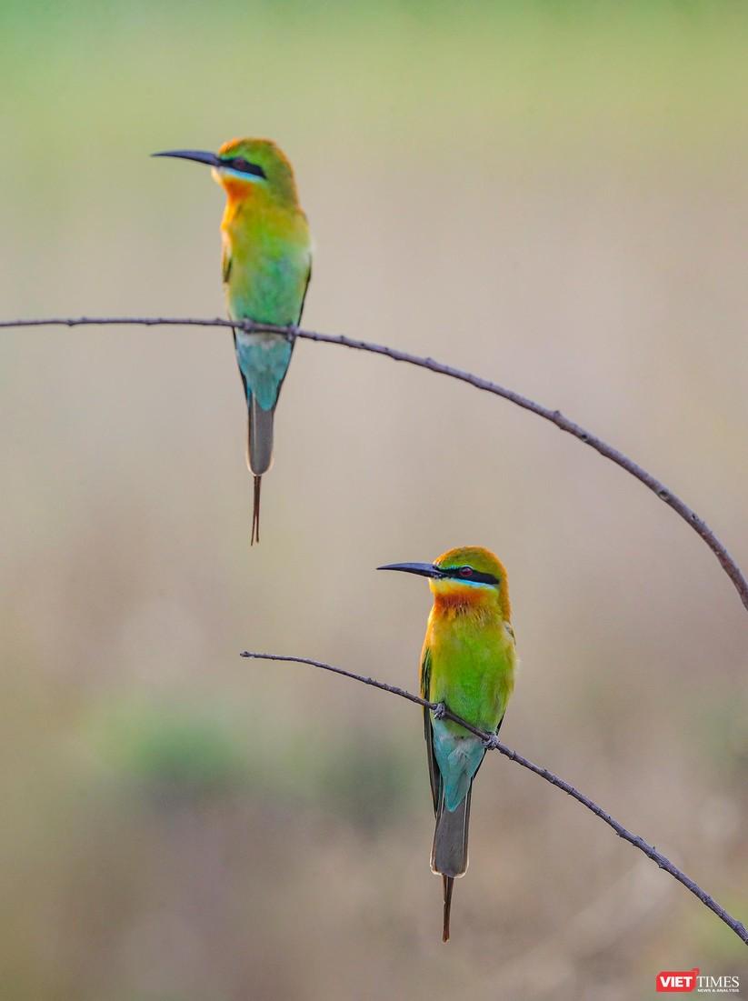 Ảnh: Độc đáo mùa chim trảu ghép đôi giữa lòng Đà Nẵng ảnh 31