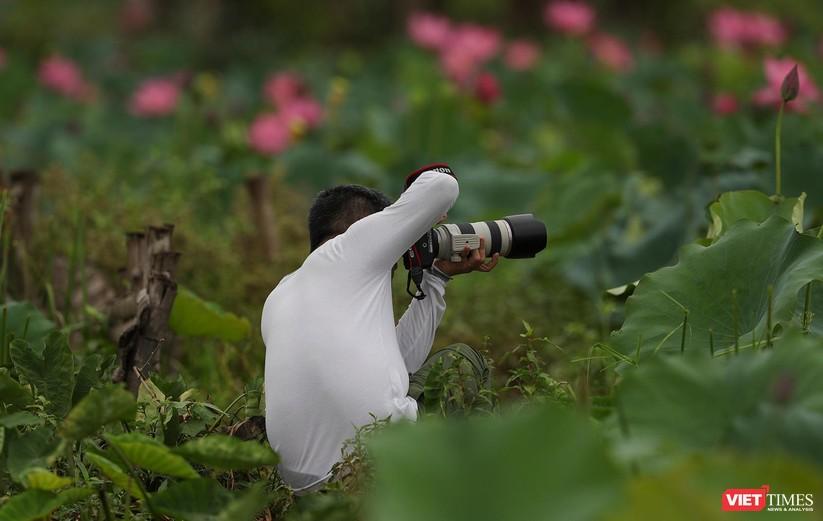 Ảnh: Vẻ đẹp khó cưỡng của đầm sen lớn Trà Lý ở Quảng Nam ảnh 8