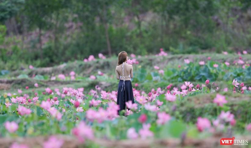 Ảnh: Vẻ đẹp khó cưỡng của đầm sen lớn Trà Lý ở Quảng Nam ảnh 29