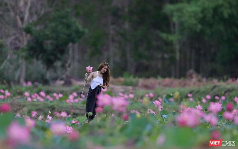 Ảnh: Vẻ đẹp khó cưỡng của đầm sen lớn Trà Lý ở Quảng Nam ảnh 11