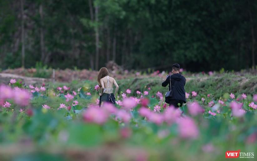Ảnh: Vẻ đẹp khó cưỡng của đầm sen lớn Trà Lý ở Quảng Nam ảnh 14